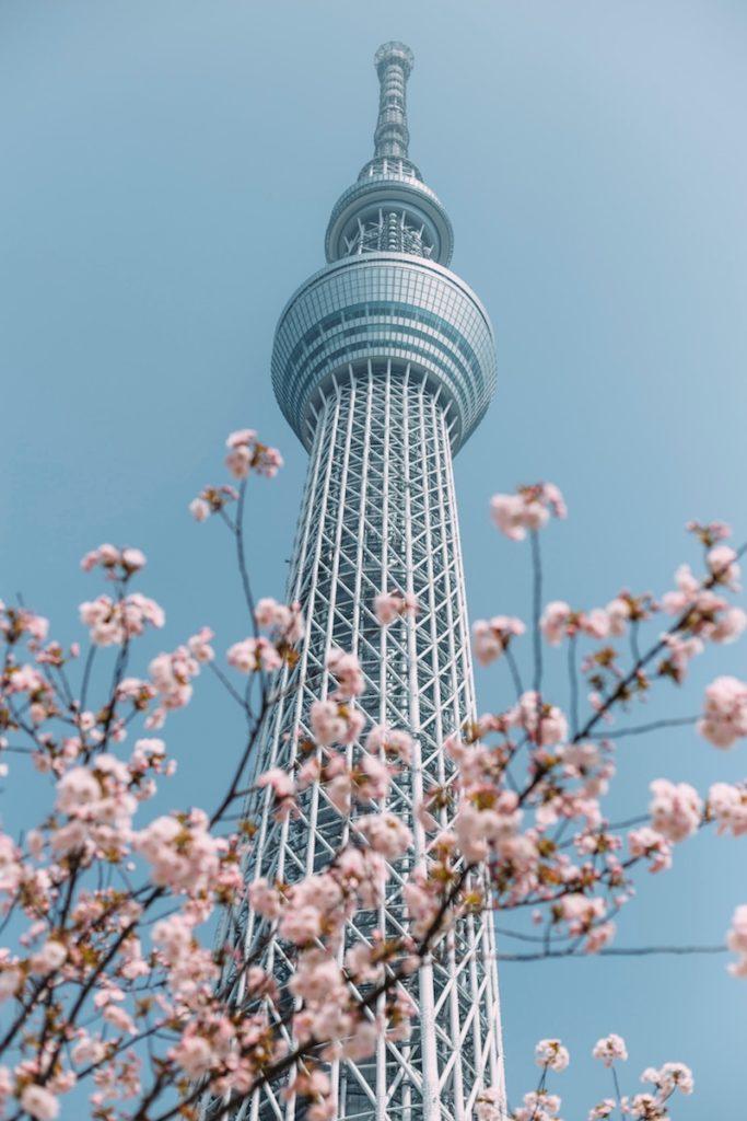 Tokyo skytree framed by cherry blossom