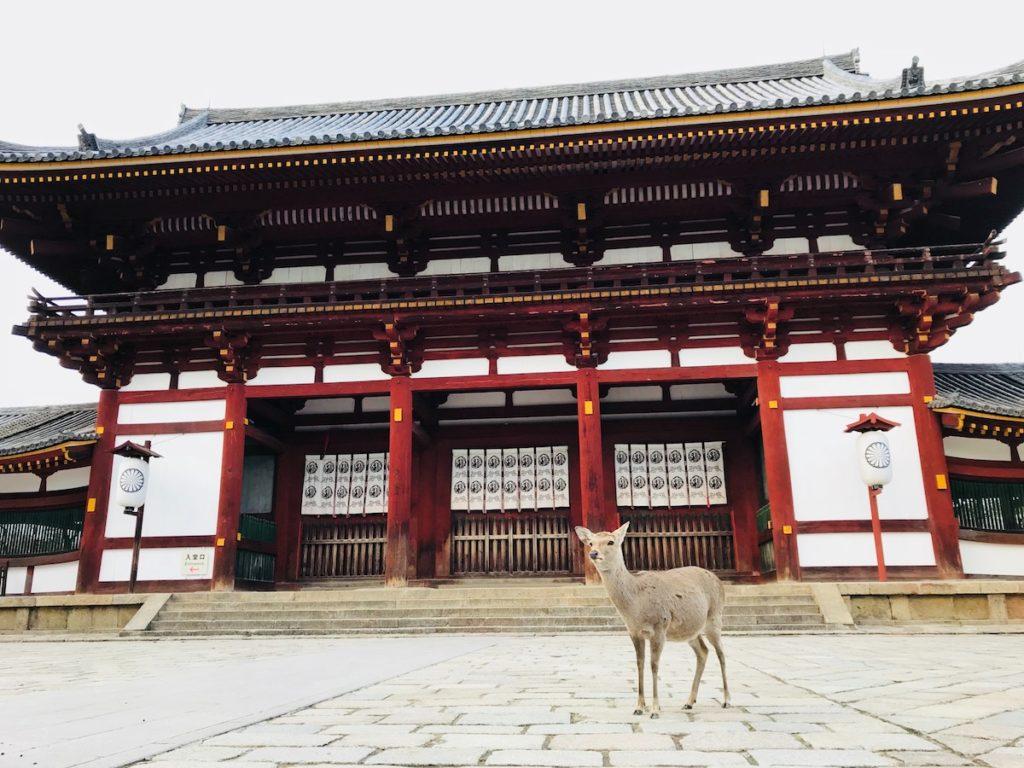 Sacred Sika deer in Nara
